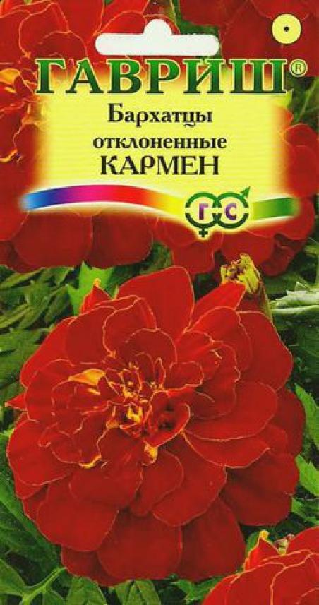 Кармен цветок