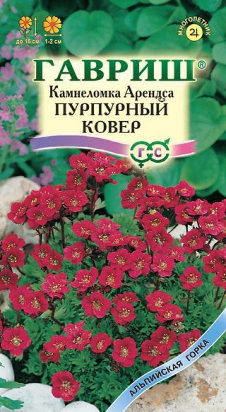 Камнеломка выращивание из семян 53