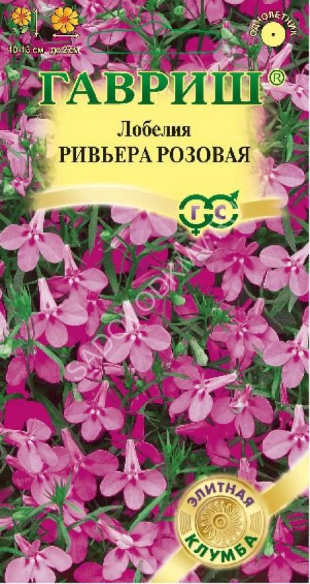 Ривьера цветок