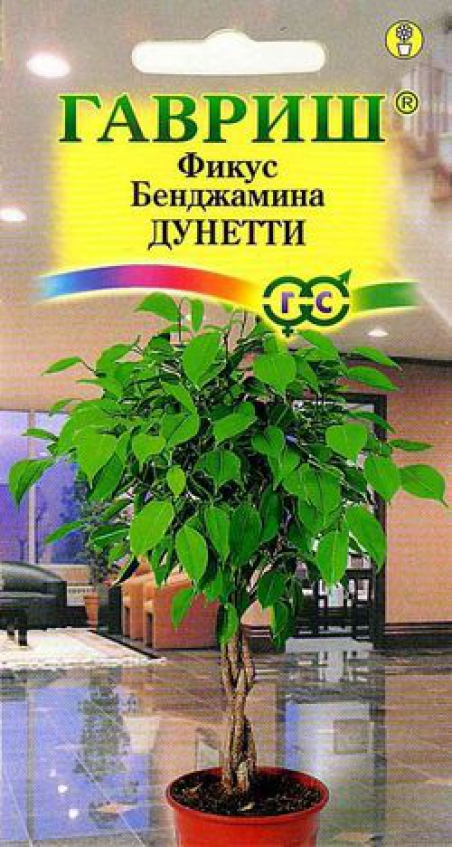 Фикус из семян в домашних условиях 66
