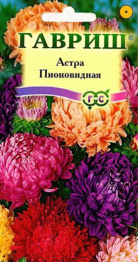 Фото цветка астра пионовидная