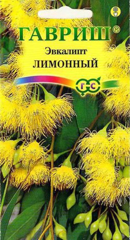 Эвкалипт лимонный флагман фото выращивание и уход в открытом грунте 43
