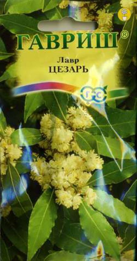Семена лаврового листа в домашних условиях